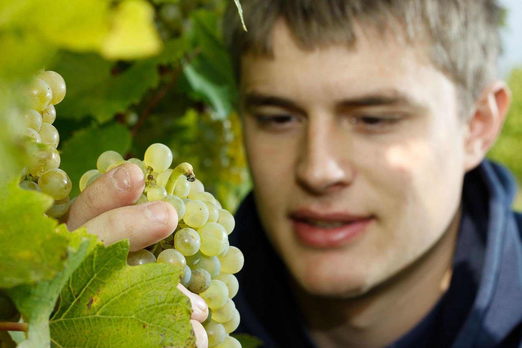 Stefan Hütter im Weingarten